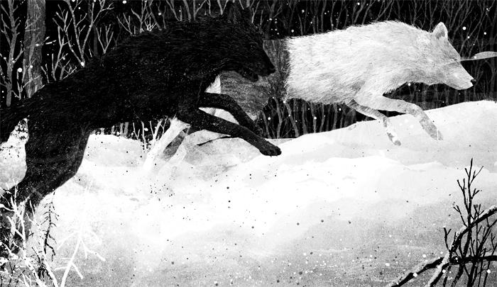 coeur-de-loup-illustration-gelrev-ongbico3
